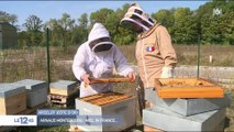 Arnaud Montebourg : miel in France...