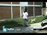 Denuncia ciudadana por envenenar perros en la unidad habitacional Narciso Mendoza
