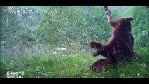 """""""Envoyé spécial"""" enquête en Ariège chez ceux qui veulent la peau de l'ours"""
