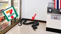 Ular piton masuk ke 7-Eleven dan tidur di depan lemari pendingin - TomoNews