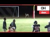 Deer INVADES American Football Pitch! | SWNS TV