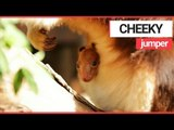 Cheeky Kangaroo Greets the World with a Smile! | SWNS TV