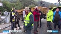 Pyrénées : bataille autour de la réintroduction de l'ours