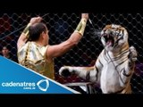 Tigre ataca a domador de un circo / Tigre ataca a su domador directo al cuello