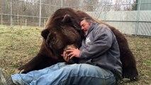 Voici Jimbo et Jim... Belle amitié entre un ours énorme et un homme