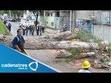 Fuertes vientos derriban árbol en carriles centrales de Río Churubusco, Iztapalapa