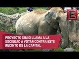 Asociación animal realiza consulta sobre el cierre del Zoológico de Chapultepec