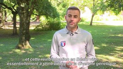 Ourses lâchées dans les Pyrénées : explications de l'ONCFS