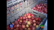 Dott. Mozzi: Le mele