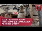 Perros rescatistas, los héroes de cuatro patas / Especial 19S, Los Héroes