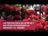Xochimilco es una buena opción para adquirir plantas de Nochebuena