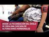 Ciencia UNAM: La maternidad genera notables cambios en el cerebro de las madres