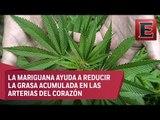 Marihuana para tratamiento de enfermedades cardiovasculares