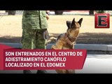 Más de mil perros adiestrados para apoyar a la población mexicana