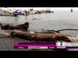 En alerta Veracruz por la tormenta 'Katia' | Noticias con Yuriria Sierra
