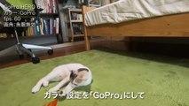 猫目線で迫力満点!GoProで子猫を撮影してみた