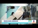 Perro salta a una alberca para salvar la vida de su amigo | Noticias con Francisco Zea