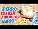 Perrito cuida a su dueño ebrio en Colombia | Noticias con Yuriria Sierra