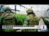 Aseguran invernadero de marihuana en el Estado de México   Noticias con Ciro Gómez L.