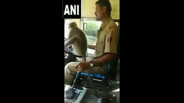 WATCH Viral video from Karnatakas Davanagere of a KSRTC bus driver driving  with a Langur p