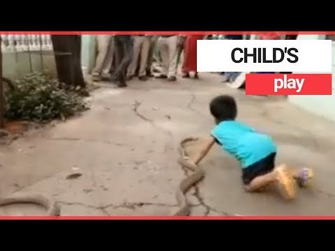 Three-year-old child plays with two snakes | SWNS TV