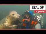 Seal HUGS Underwater Diver! | SWNS TV