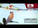 Festival de cortos Shor Short llega a México / Loft Cinema