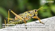Le Pentagone souhaite réaliser une armée d'insectes modifiés génétiquement