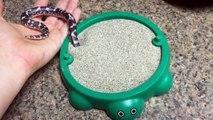 Un petit serpent qui joue dans son bac à sable... adorable