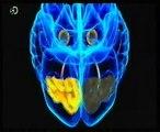 Vision ciega: Emociones inconscientes (Beatrice de Gelder)