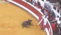 Ce taureau simule sa mort en pleine corida !