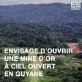 Montagne d'or, le mauvais exemple guinéen