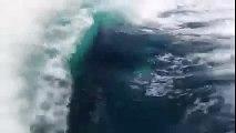 Orche in gruppo insegue turisti sulla loro loro barca