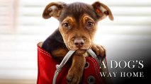 A Dog's Way Home Bande-annonce VO (2019) Ashley Judd, Jonah Hauer-King