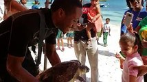 The Anguilla Department of Fisheries & Marine Life hosted a turtle tag and release mission today of Greenback turtles. Resort guests and many school children we