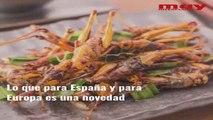 Comer insectos será común en Europa