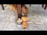 Dog Growls Fiercely at Toy Puppy
