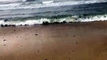 les boulettes de pétrole s'échouer sur la plage de Pampelonne