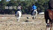 Previas Campeonato de España de Galgos 2017 / Previous Spanish Championship of greyhounds 2017