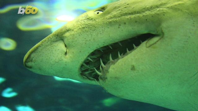 Scared of Sharks? Why Swimming With Them May Change Your Mind According to Science