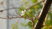 Typhoons Trick Japanese Cherry Blossoms Into Blooming Months Early