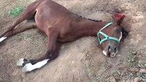 Şanlıurfa'da Şüpheli Yarış Atı Ölümleri