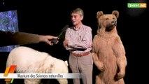 L'Avenir - Expo de l'ours au nounours