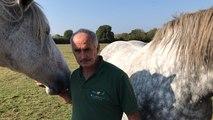 La fête du cheval Percheron dimanche au Mans