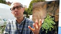 Grand Bivouac à Albertville : avec Arnaud Guérin, gros plan sur la biodiversité