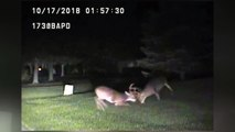 Stag fight caught on police camera in Ohio