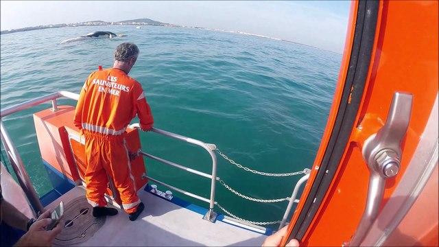 SNSM Cap d'Agde: Une baleine de plusieurs tonnes échoué au port du Cap d'Agde