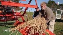 Le soutien de l'association Graines de Noé aux paysans qui cultivent de vieilles variétés de blé et de céréales