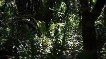 Découvrez l'une des régions les plus verdoyantes de La Réunion, au cœur d'une nature exubérante ! ️En savoir plus =>  #lareunion #gotoreunion