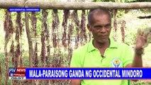 Ang mga paraiso sa Occidental Mindoro
